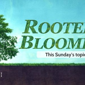 Change of Heart Part 4: Rooted and Blooming